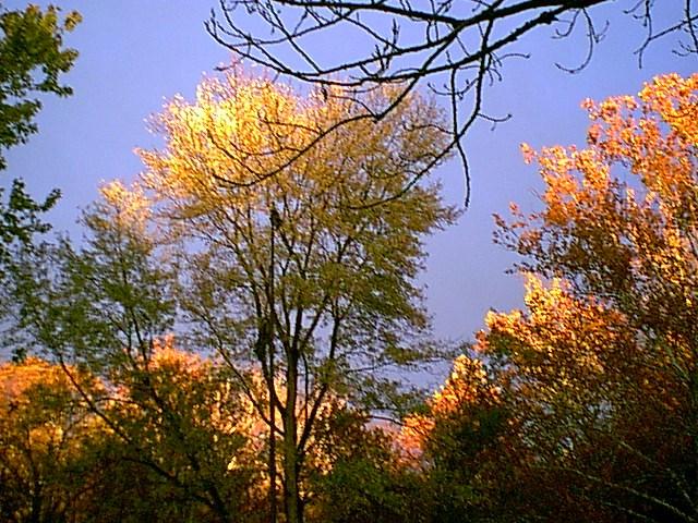 trees10-15-01c.jpg